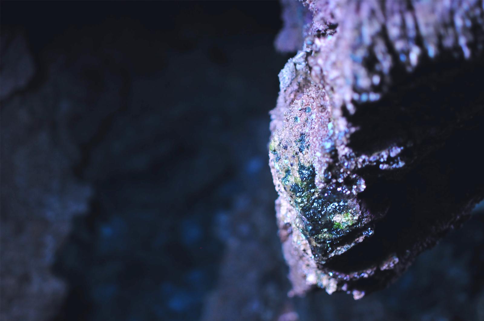 龍泉洞の住人達